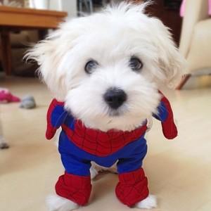 #PuppyTags