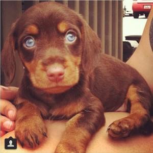 puppystation