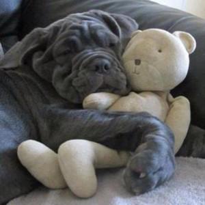 #PuppyPalace